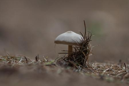 Mushroom Zdjęcie Seryjne