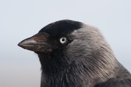Closeup of a cros