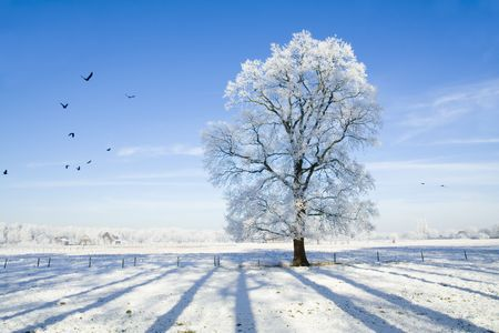 Winter scene with snow covered tree and birds Stock Photo - 5935797