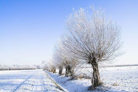 雪覆われた農地の木と青い空