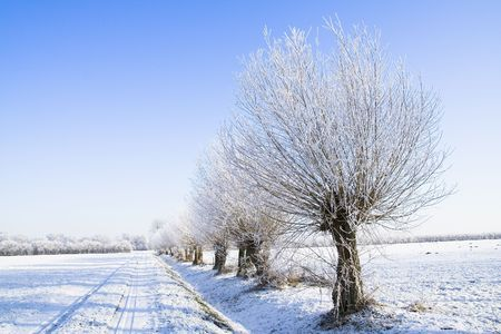 Snow covered farmland with trees and a blue sky Stock Photo