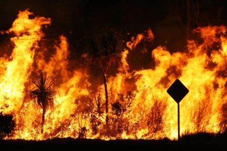 burning bush: Bush fire close up at night