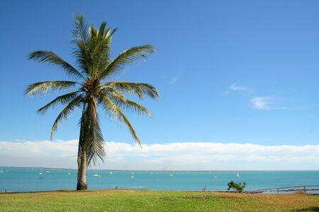 ベイと、オーストラリアのダーウィンにパームツリーを眺め 写真素材