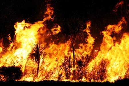 森林火災は夜にクローズ アップ