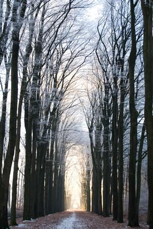 冬の森の中の経路 写真素材