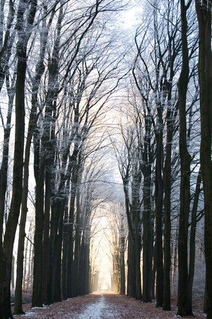 Pathway through a forest in Winter