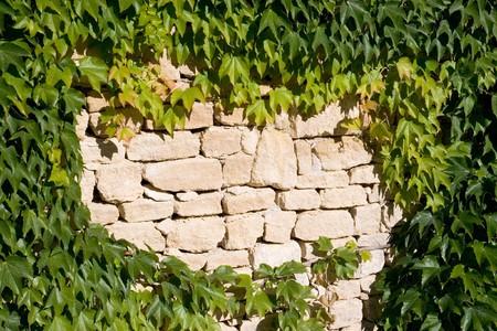 古い石の壁の葉 写真素材