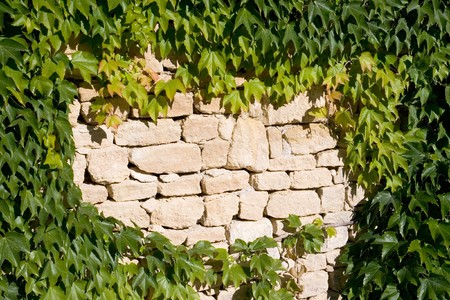 Old stone wall with leaves photo