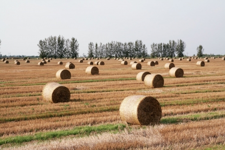 Hay bales Stock Photo - 7605112