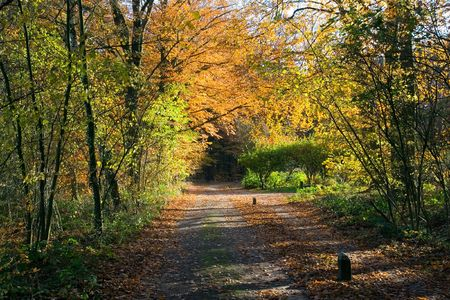 Pathway through a forest in Autumn Stock Photo - 7605124