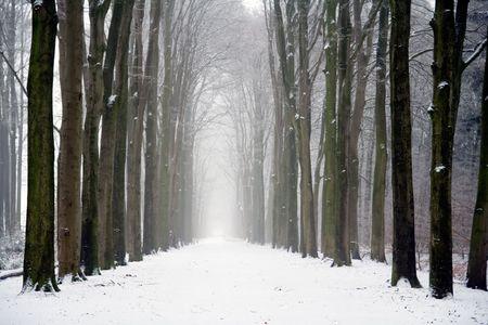 曇った冬の日の森