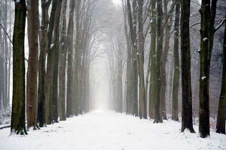 winter forest: Forest on a cloudy winter day