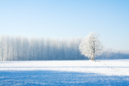 Snow covered farmland and trees during winter