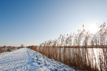 Snow covered path with the sun shining through the reeds photo