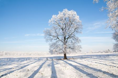 Snow covered farmland and tree with blue sky.  photo
