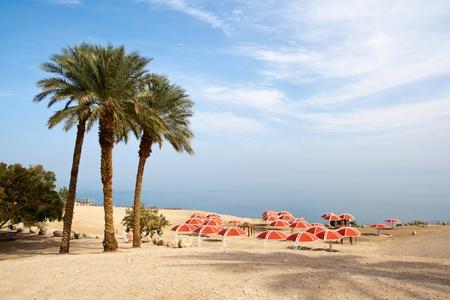 Ein Gedi oase at the Dead Sea. Israel