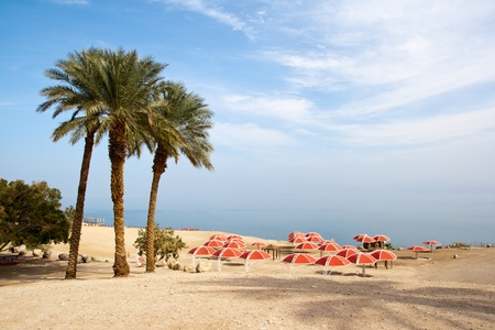 nature reserves of israel: Ein Gedi oase at the Dead Sea. Israel