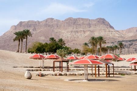 gedi: Ein Gedi oase at the Dead Sea. Israel