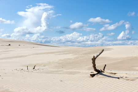 The moving dunes in the Slowinski National Park, Poland photo