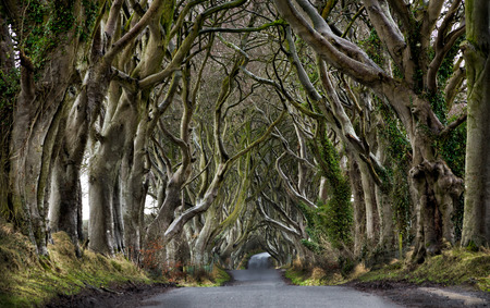 hedges: Dark Hedges