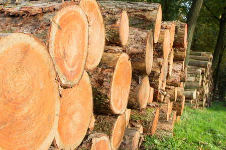 sawed: Wooden Logs in a forest Stock Photo