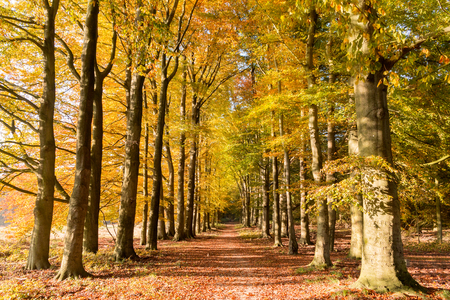 autumn landscape: Forest the Hoge Veluwe in The Netherlands during Autumn