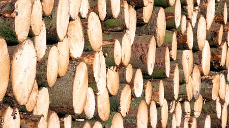 logs: Wooden Logs Stock Photo