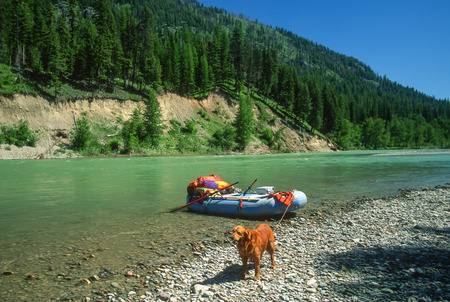 retreiver: Wide angle river landscape with a large male golden retriever standing on the bank of a big green colored glaciial river. A big rubber raft loaded with lots of gear for extended overnight float trips. Glacier National Park, Montana