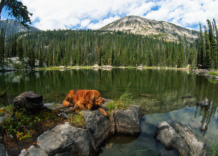 retreiver: Wide angle landscape of a beautiful small mountain lake with a big male golden retriever laying on big smooth rocks on the edge of the lake. Gorgeous green colored lake with green forest and a mountain peak in the background.