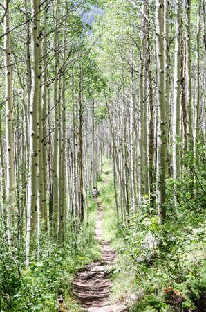 Aspen Mountain Trail