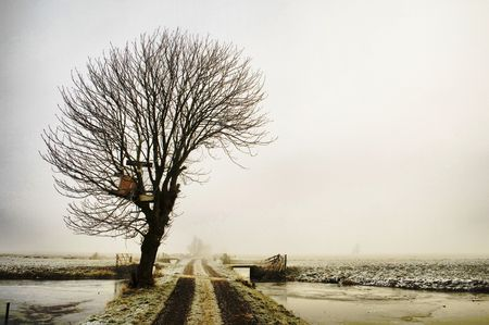 Winter tree in a foggy landscape Stock Photo - 4151365