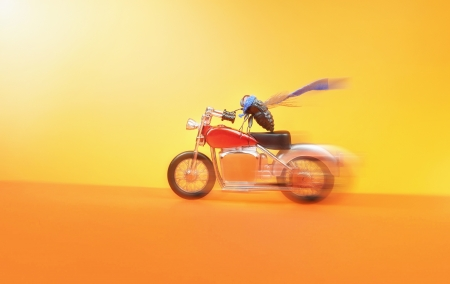 Biker fly living his dreams