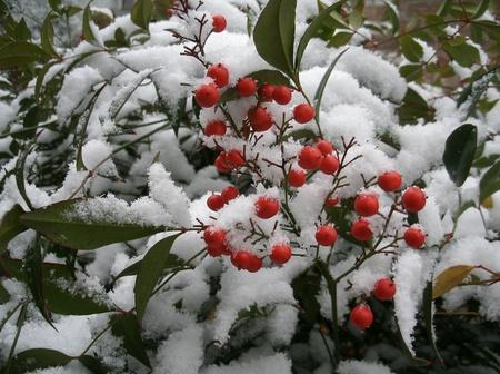 雪に覆われた赤い打ち破った