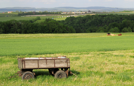 cows red barn: view on trailer in a green landscape by daylight Stock Photo