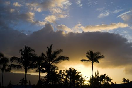Magnificent tropical sunset behind palms in Hawaii photo