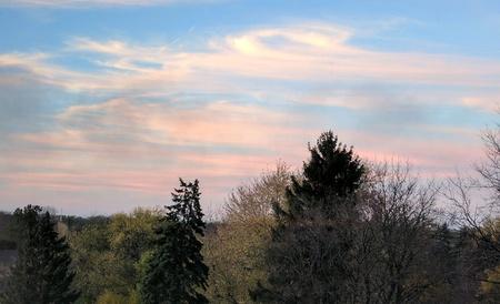Forest view Reklamní fotografie