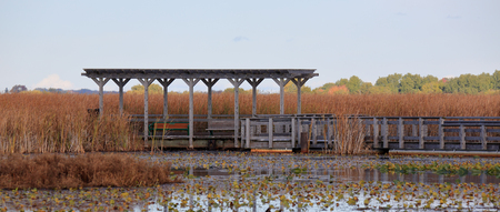 Pagoda along a boardwalk through a marsh in autumn