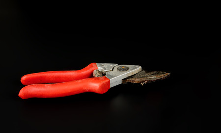 One rusty pruning shears with a red handle on a black background Stock Photo