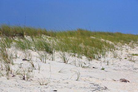 Grasses on a sand dune on the coast of the Gulf of Mexico Stock Photo