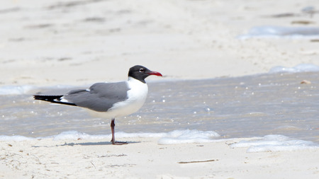 One seagull standing on a beach