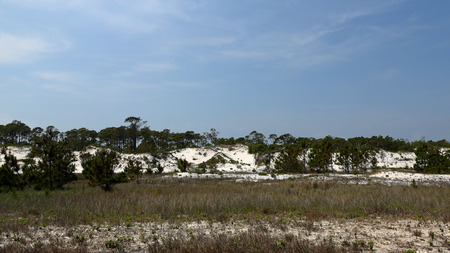 Pine trees and shrubs growing on a mature sand dune in Florida Standard-Bild