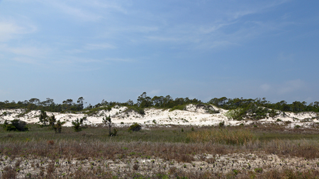 Pine trees and shrubs growing on a mature sand dune in Florida Stock Photo