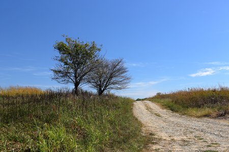Two trees at the side of a lonely gravel road in central Indiana