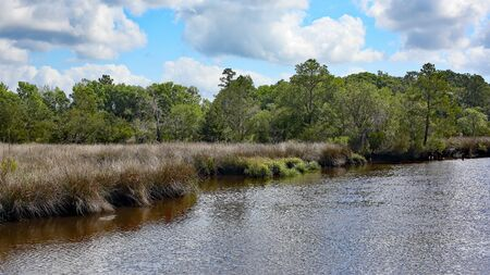 A waterway in coastal Georgia with grasses along the shore and trees in the background Banco de Imagens