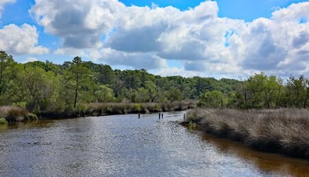 A waterway in coastal Georgia with grasses along the shore and trees in the background Stock Photo