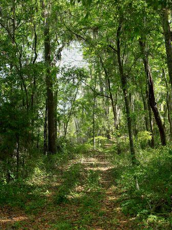 Path through a forest in coastal Georgia, USA Banco de Imagens