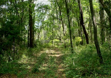 Path through a forest in coastal Georgia, USA Stok Fotoğraf