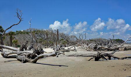 Driftwood on Driftwood Beach in coastal Georgia Stok Fotoğraf