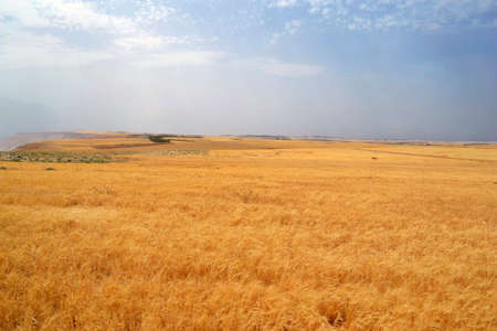Jordanian Plains.