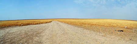 plains: Dirt Road of the Plains